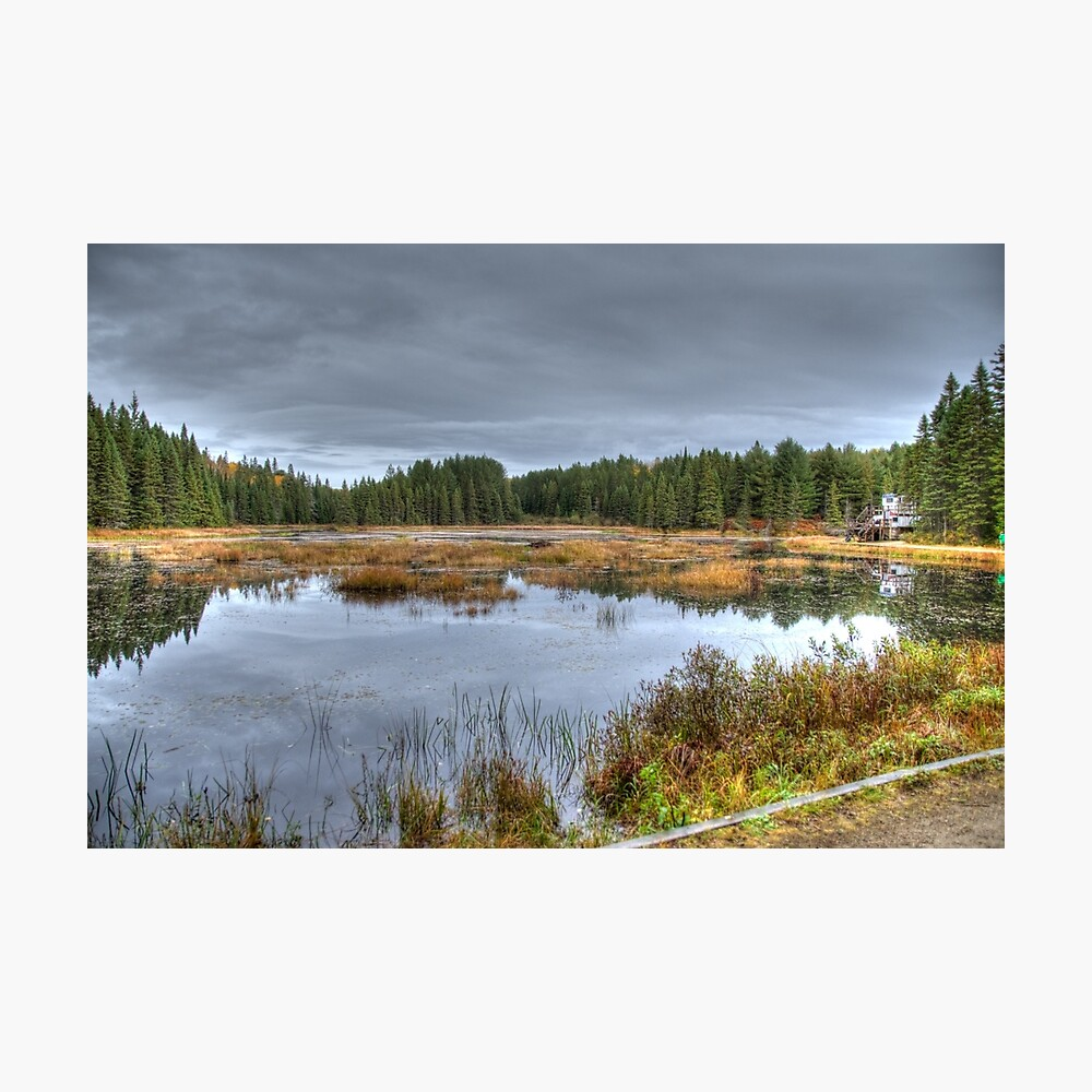 Wetlands Photographic Print