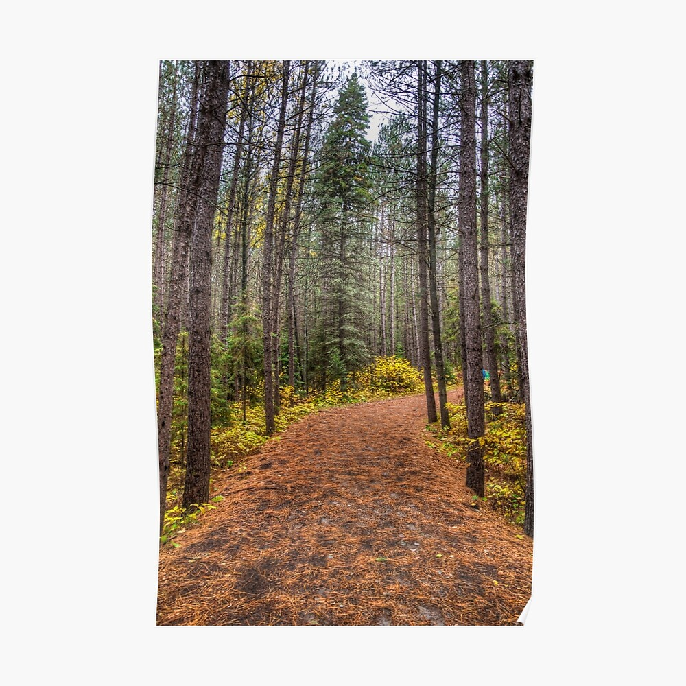 Path between the pines Poster