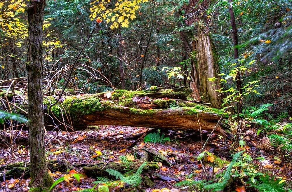Fallen tree by Dave Riganelli