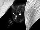 Hosta la vista...!   :) by Laurie Minor