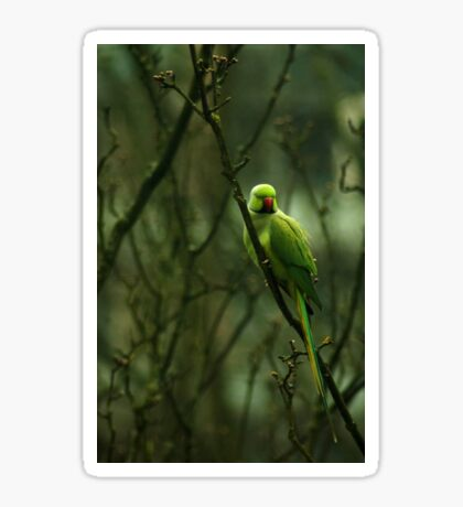 Green Ringnecked Parakeet Sticker