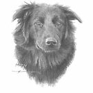 black dog 'Macy' drawing by Mike Theuer