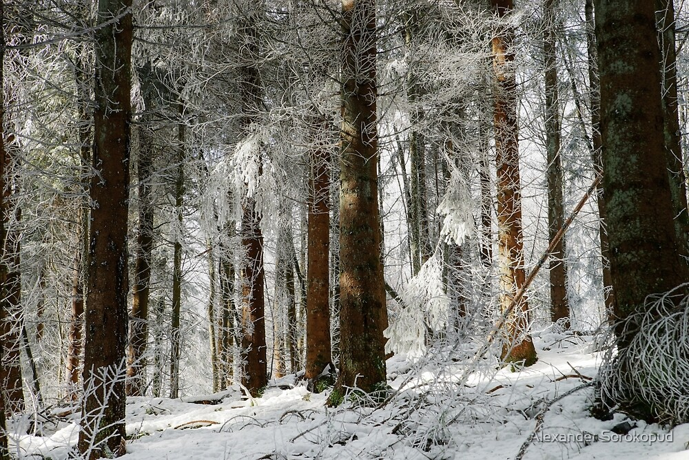 Beautiful icy forest lanscape view, winter time by Alexander Sorokopud