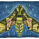 Pandora Sphinx Moth by EmilyBodnar