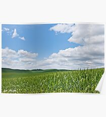 Rolling Wheatfields in the Palouse Poster