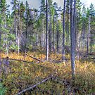Pine trees in the marsh by Dave Riganelli
