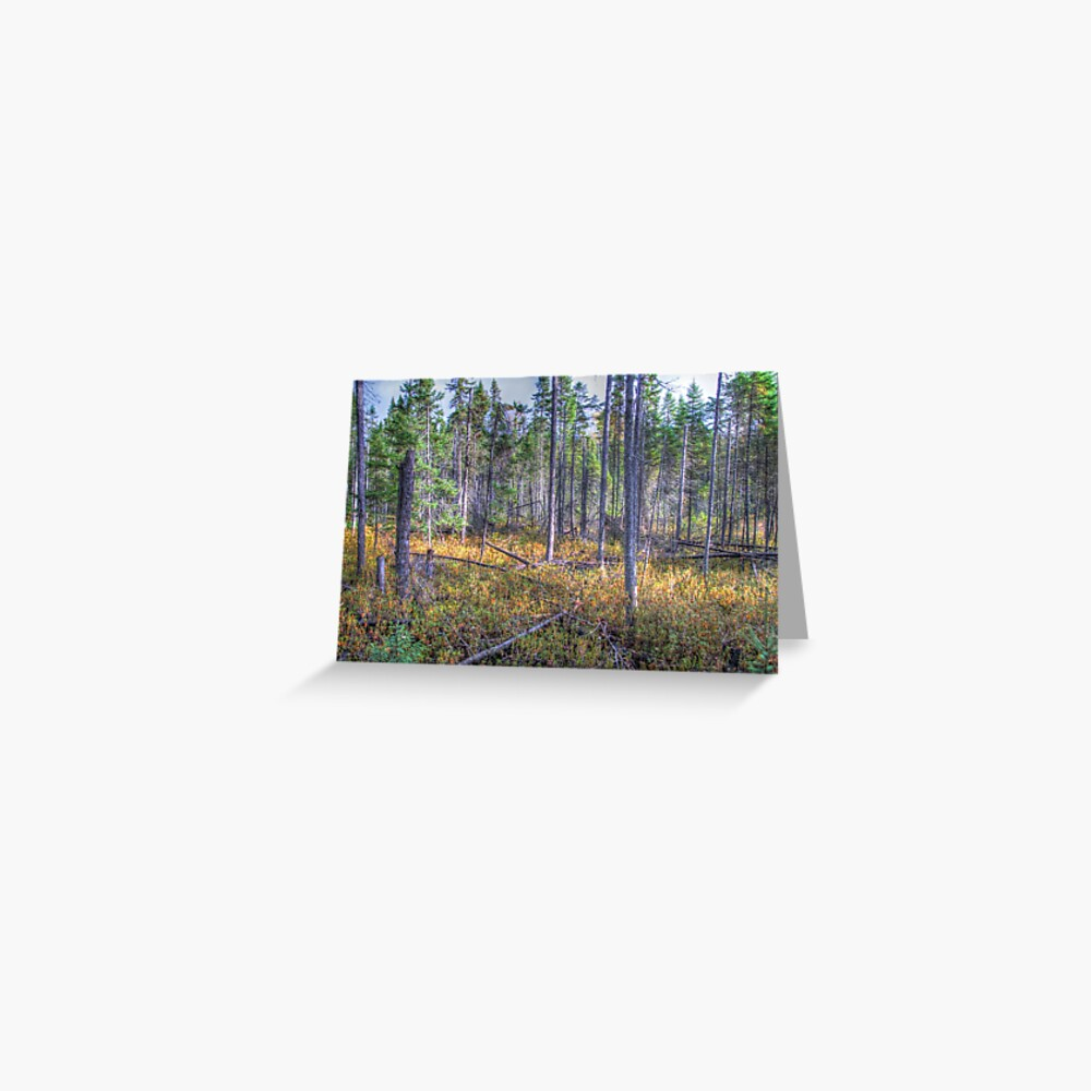 Pine trees in the marsh Greeting Card