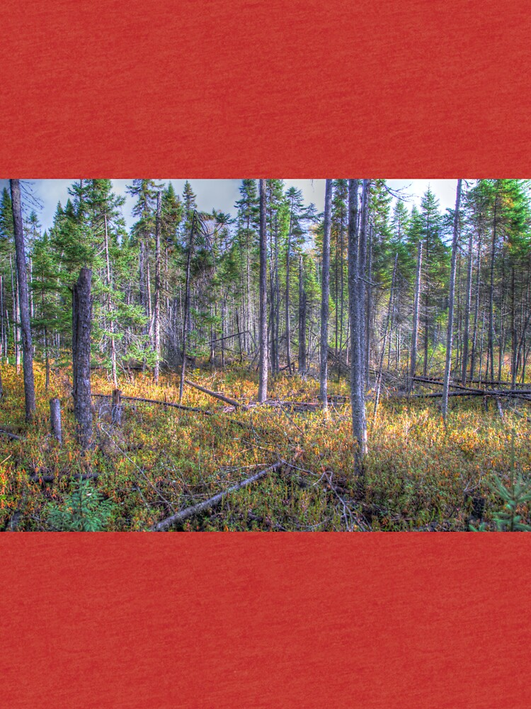 Pine trees in the marsh by daveriganelli