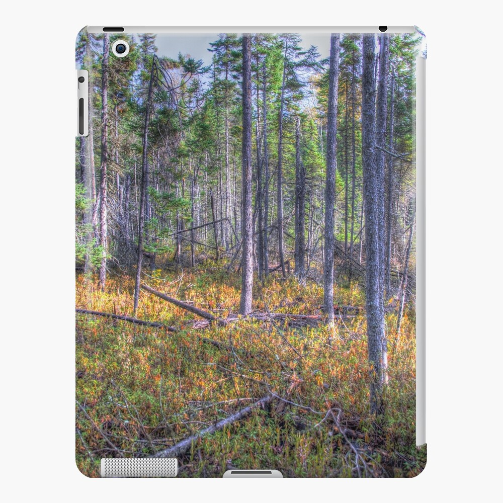 Pine trees in the marsh iPad Case & Skin