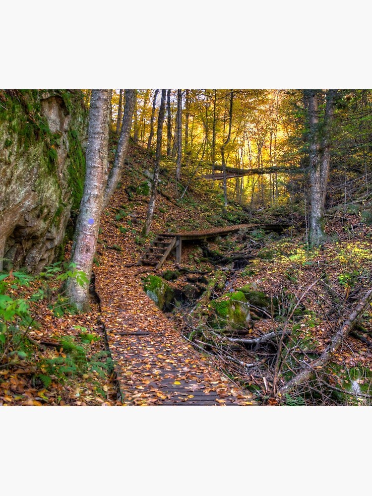 Walkway through the woods by daveriganelli