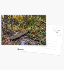 Forest walkway Postcards