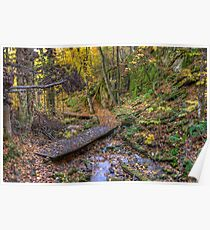 Forest walkway Poster