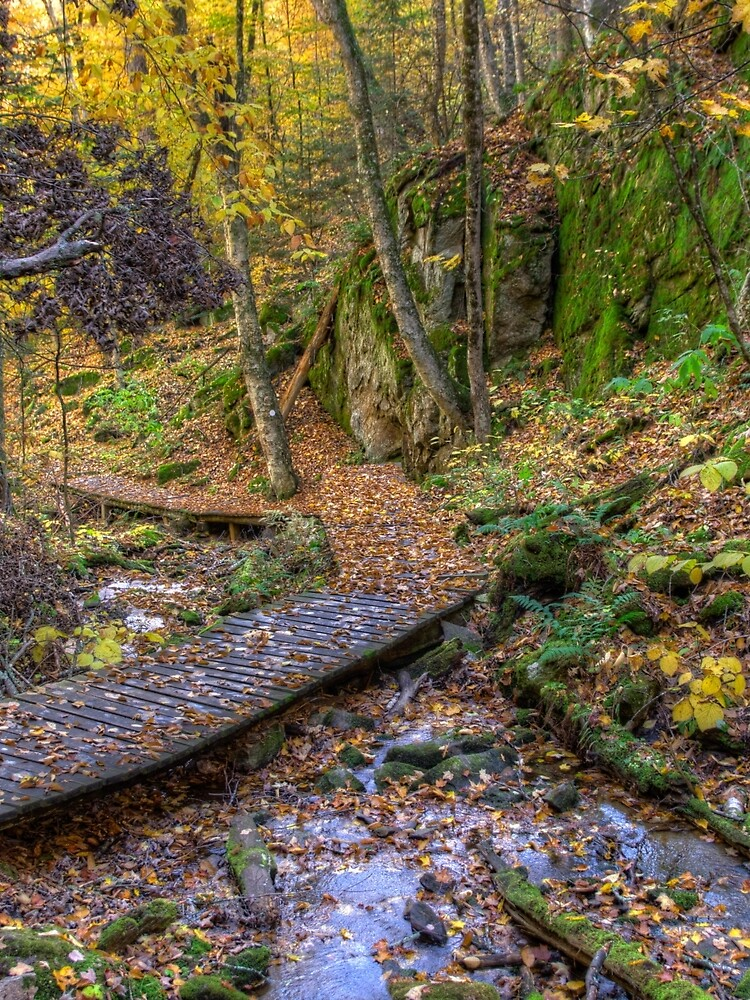 Forest walkway by daveriganelli