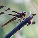 Dragonfly On A Stick by Deb Fedeler