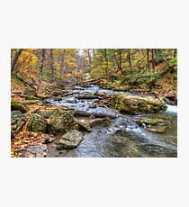 Forest river Photographic Print