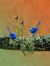 Blue Wrens & Winter Orchids Western Australia by Leonie Mac Lean