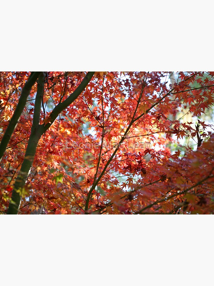 Maple Leaves by yallmia