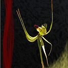 Forest Mantis with Red by Leonie Mac Lean