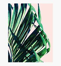Palm V2 #redbubble #lifestyle #home #style Photographic Print