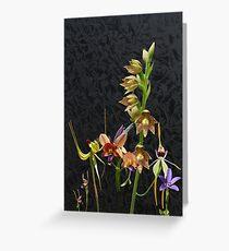 Native Australian Orchids Dunsborough 1 Greeting Card