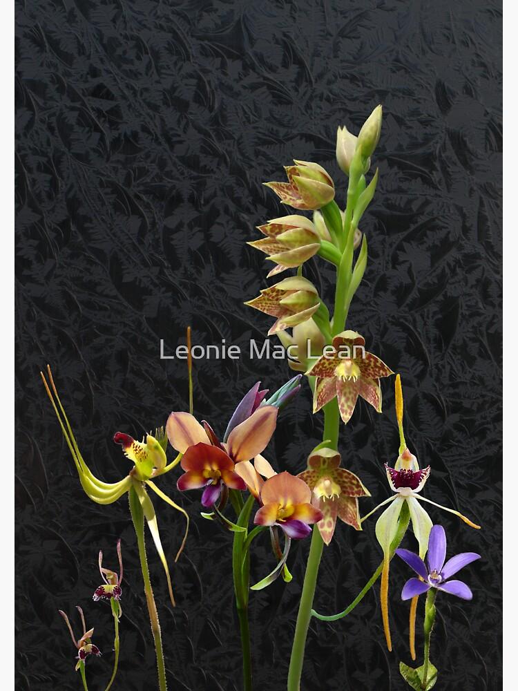 Native Australian Orchids Dunsborough 1 by yallmia