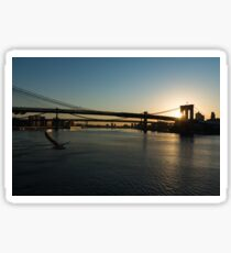 Soaring - Brooklyn Bridge Sunrise with a Seagull Sticker