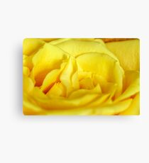 Yellow rose macro Canvas Print