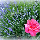Lavender and Rose by Charmiene Maxwell-Batten