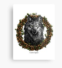 Canis Lupus - Gray Wolf Metal Print