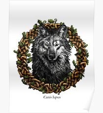 Canis Lupus - Gray Wolf Poster