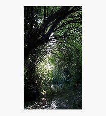 Dappled Forest Sunlight Photographic Print