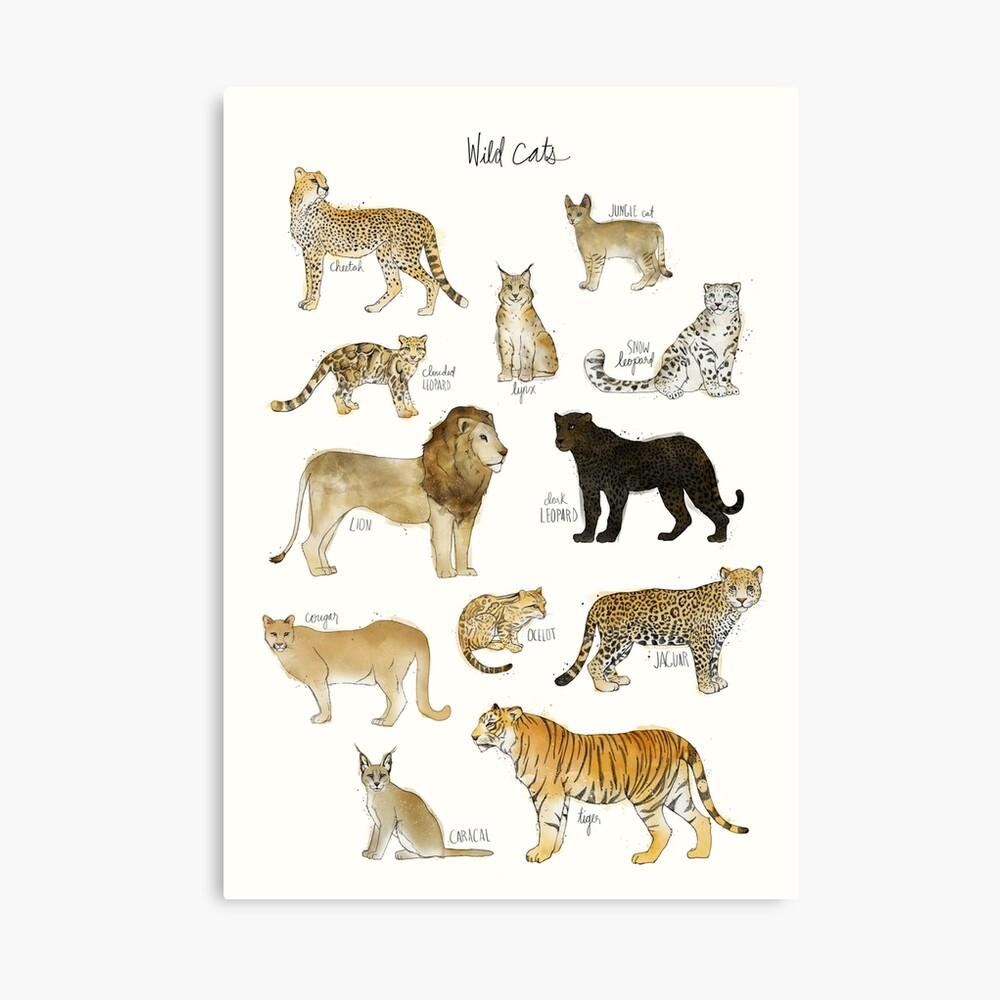Wilde Katzen Leinwanddruck