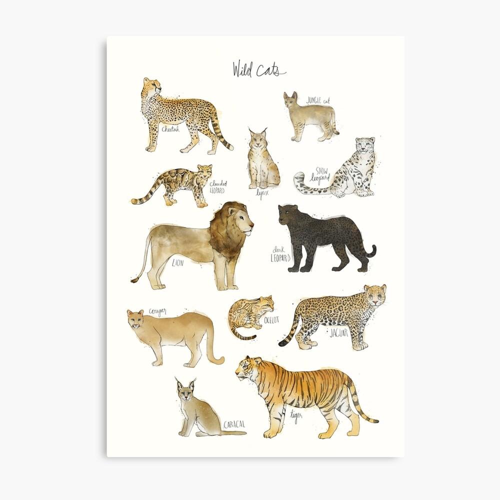 Wilde Katzen Metallbild
