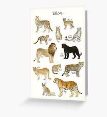 Wilde Katzen Grußkarte