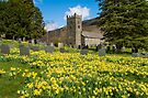 Troutbeck Daffodils by Stephen Miller
