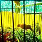 Two birds in cages. by ALEJANDRA TRIANA MUÑOZ