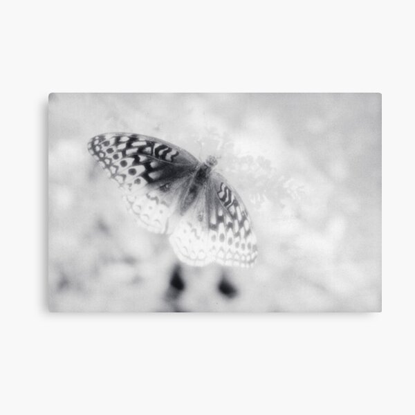 Infrared Butterfly Canvas Print