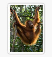 Orangutan Hanging Sticker