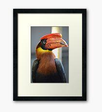 Bright Coloured Toucan Framed Print