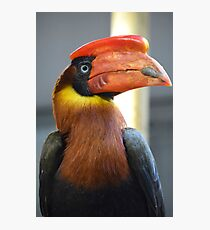Bright Coloured Toucan Photographic Print