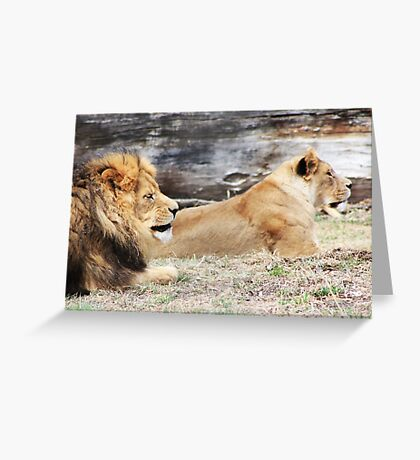 African Lion and Lioness Greeting Card