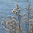 Frozen in Winter by ienemien