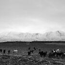 The herd von nurmut