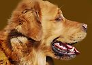 Golden Retriever  by Laurie Minor