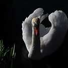 The Swan by robevans