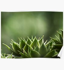 Green Succulent leaves Poster