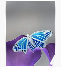Blue and white Monarch butterfly 2 Poster