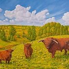 Highland Cattle Pasture by Veikko  Suikkanen
