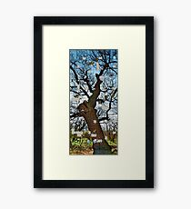 Old tree puzzle Framed Print