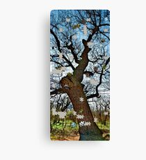 Old tree puzzle Canvas Print